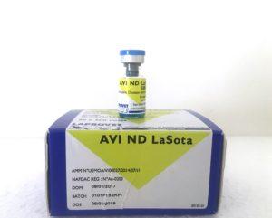 AVI ND Lasota Image