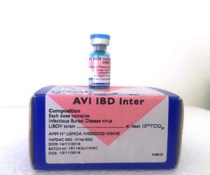 AVI IBD Inter Image