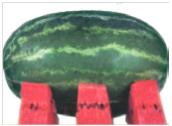 watermelon Kifaru F1 Image